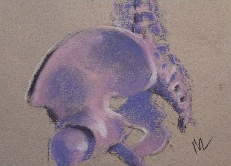 pastel drawing of a pelvis