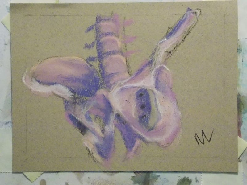 pastel drawing of a human pelvis