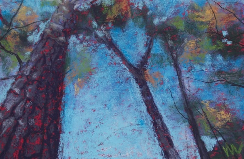 pastel painting of a big pine tree in the Julington Durbin Preserve