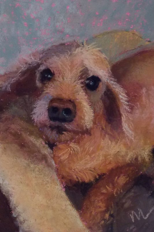 pastel portrait of a cocker spaniel