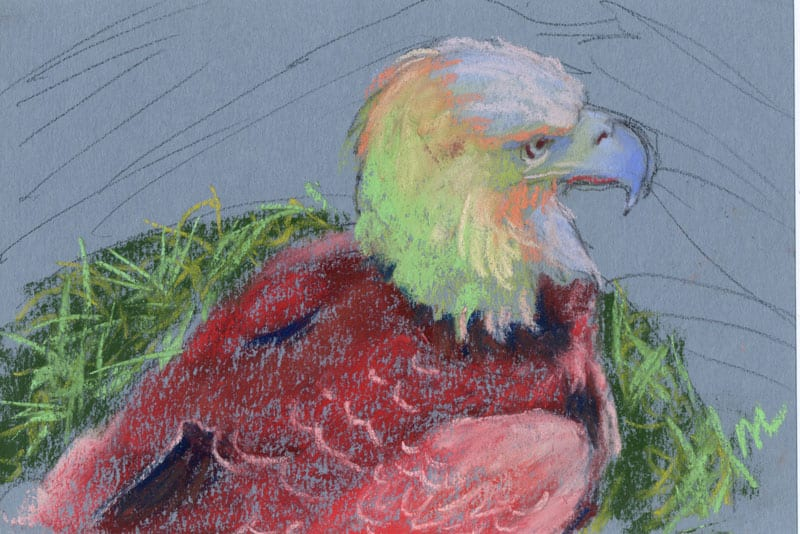 pastel drawing of an eagle in rainbow colors