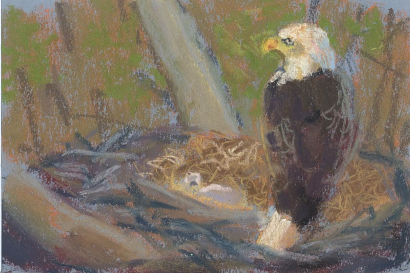 pastel study of an eagle and two eaglets