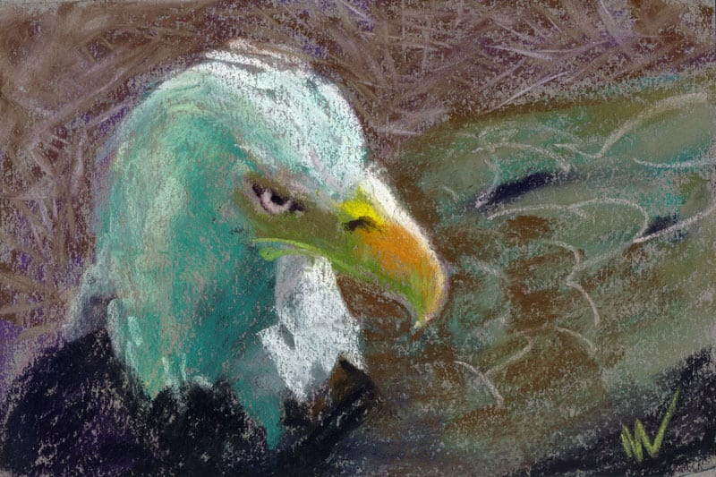 Eagle study in pastel