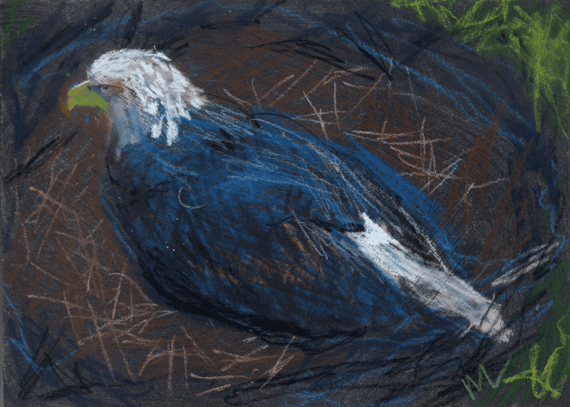 pastel drawing of an eagle on a nest