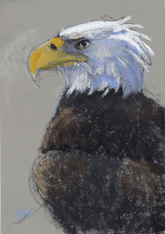pastel of a bald eagle