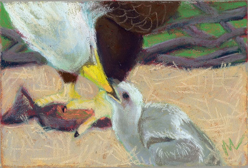 pastel painting of a bald eagle and eaglet