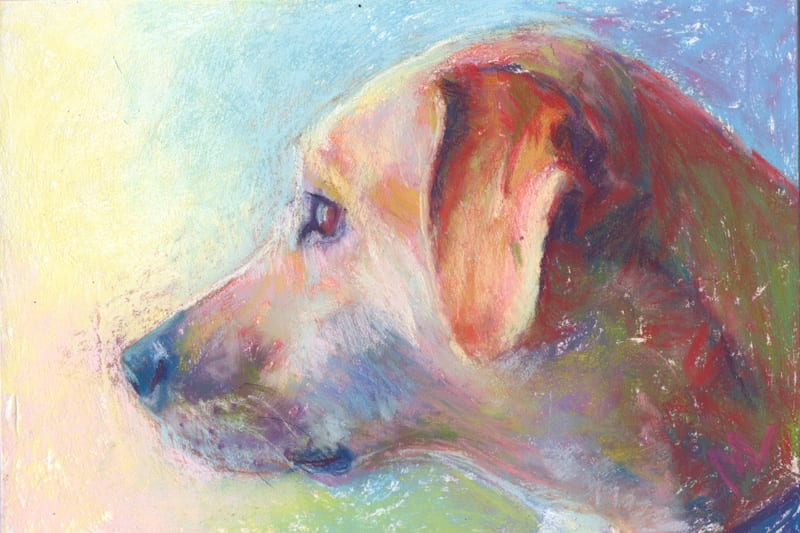 Pastel portrait of a dog.