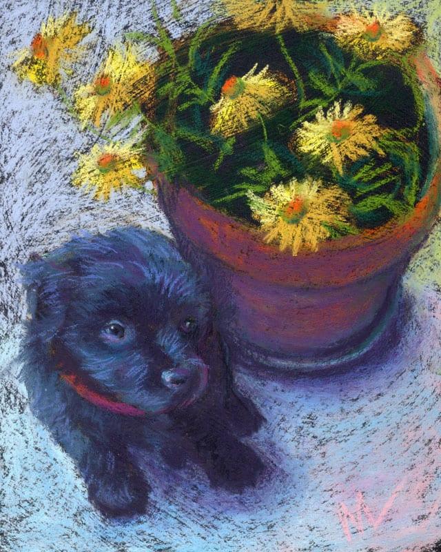 """Marie Marfia, Teddy with Daisies, soft pastel on black gator board, 10x8"""""""