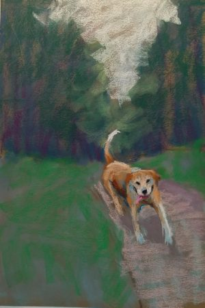 dog in the woods coming toward you happy
