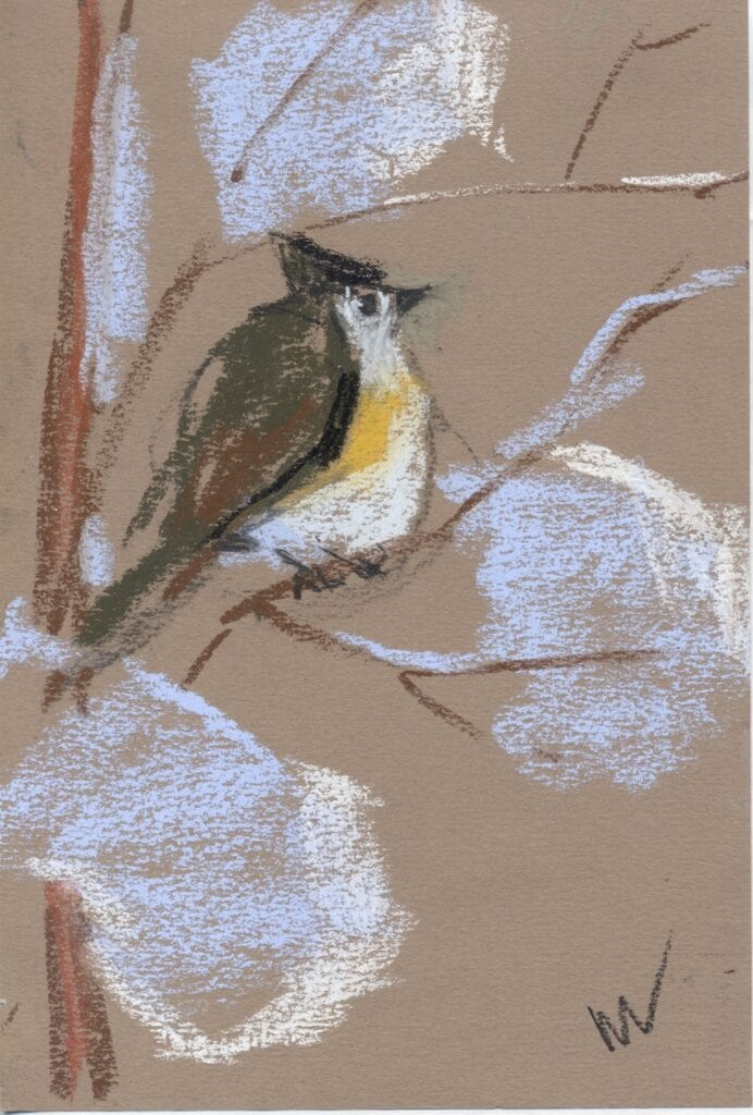 pastel drawing of a bird on a branch with snow