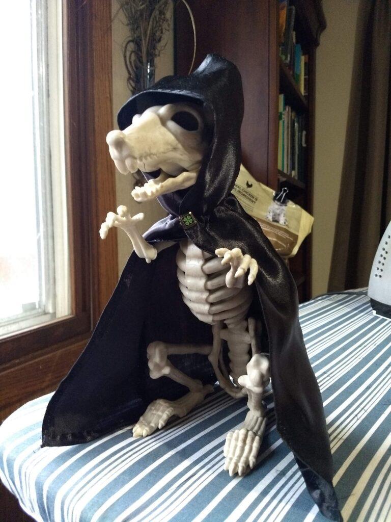 Ralph, my skeleton rat.